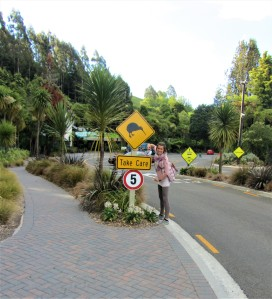 Stop-over in Rotorua while road tripping through New Zealand
